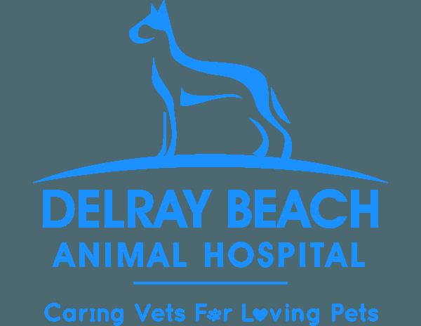 Delray Beach Animal Hospital L Veterinarian Delray Beach Fl