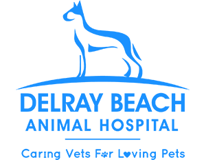 Delray Beach Animal Hospital l Pet Dental Care Delray Beach
