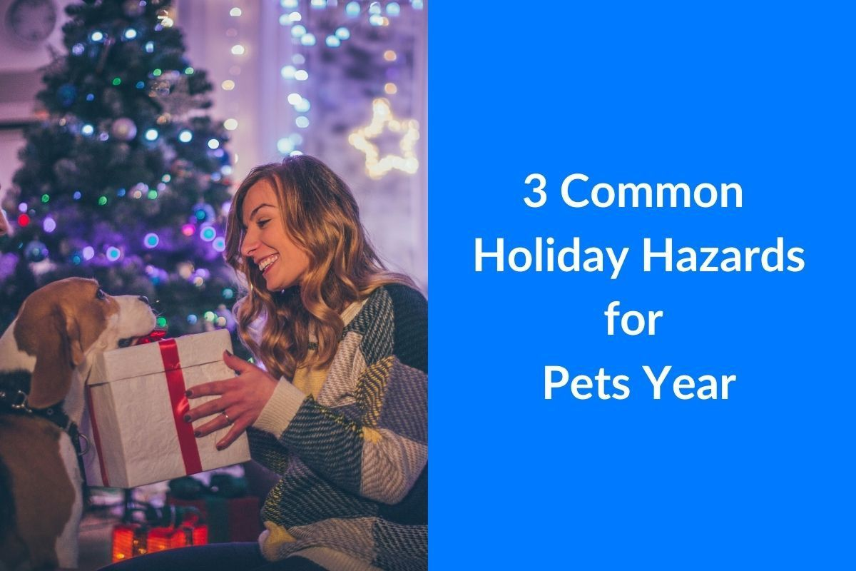 3-Common-Holiday-Hazards-for-Pets