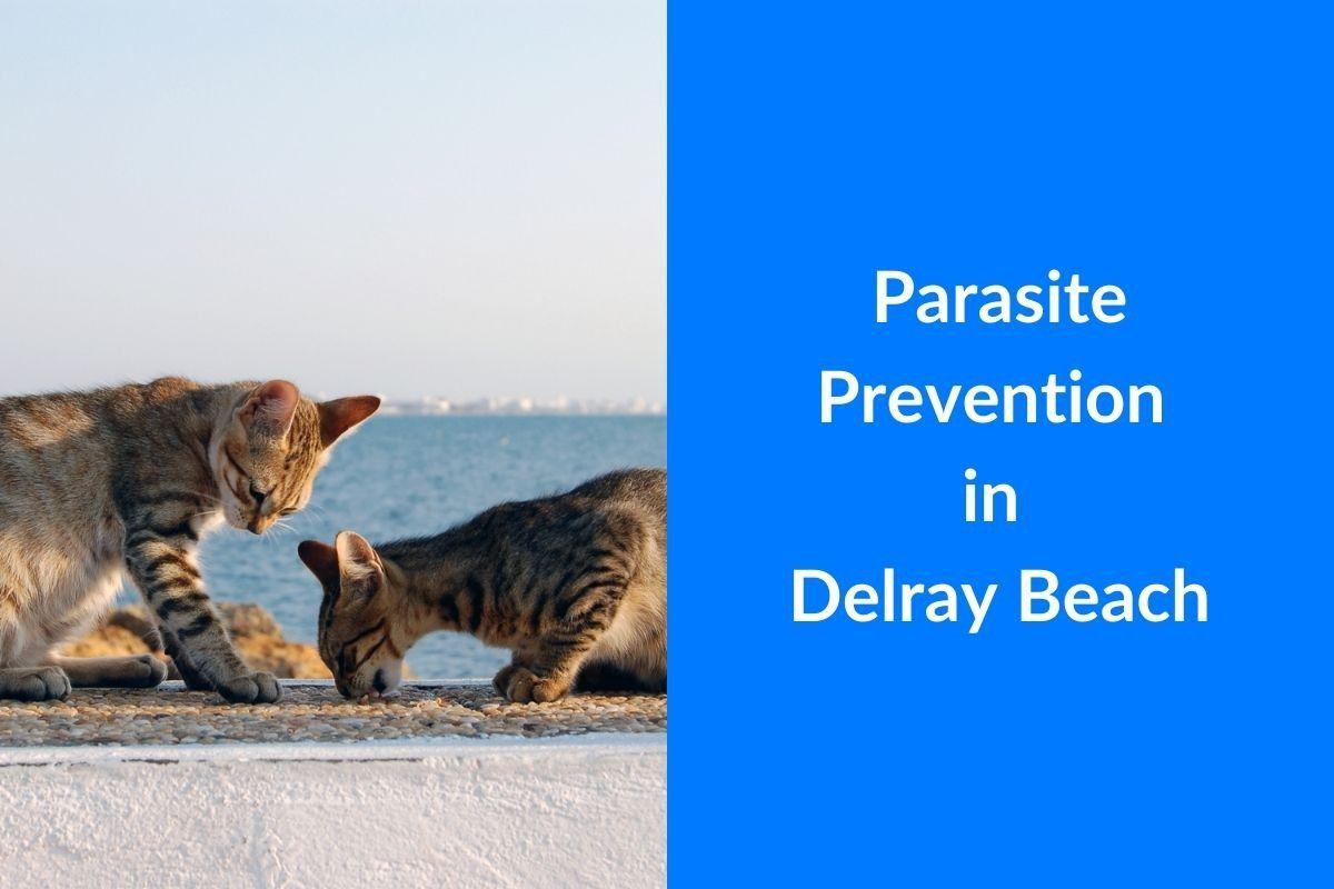 Parasite-Prevention-in-Delray-Beach