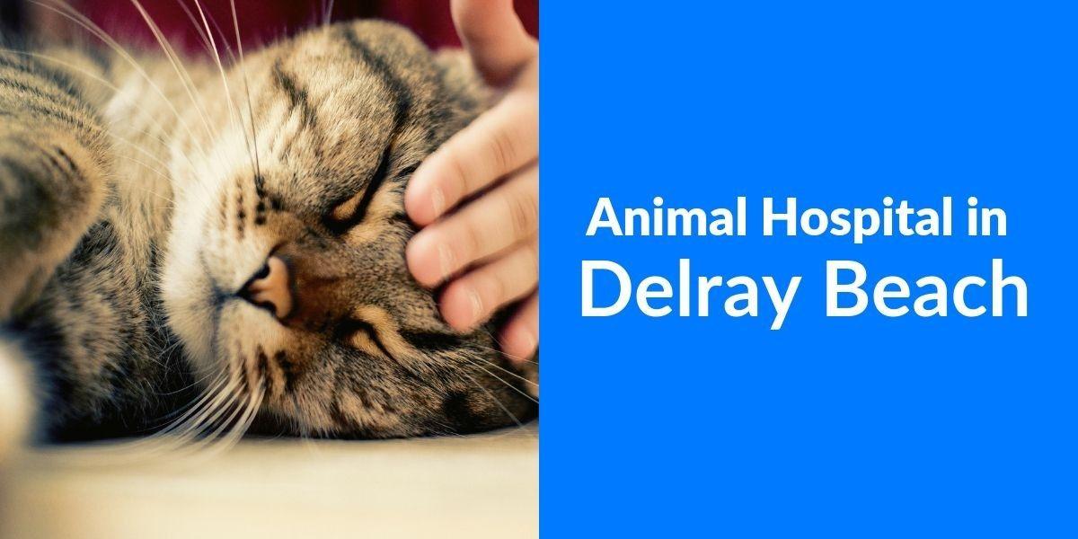 Animal_Hospital_in_Delray_Beach