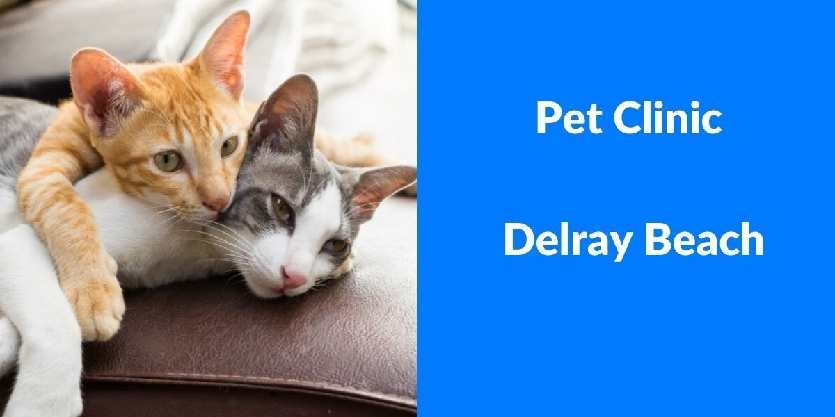 Pet_Clinic_Delray_Beach