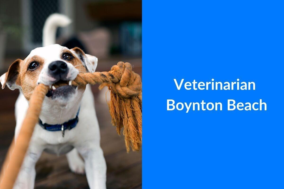 Veterinarian-Boynton-Beach-1