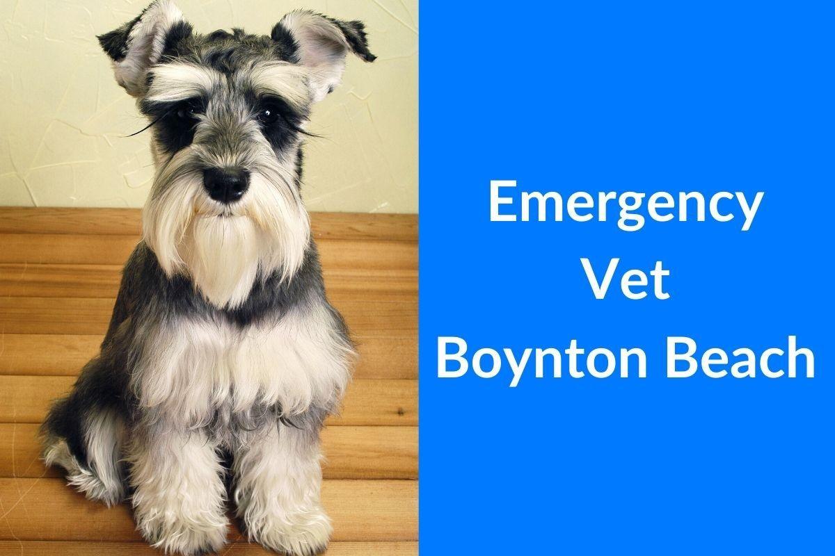 Emergency-Vet-Boynton-Beach